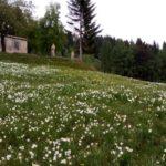 Baita Elica monte Pigna