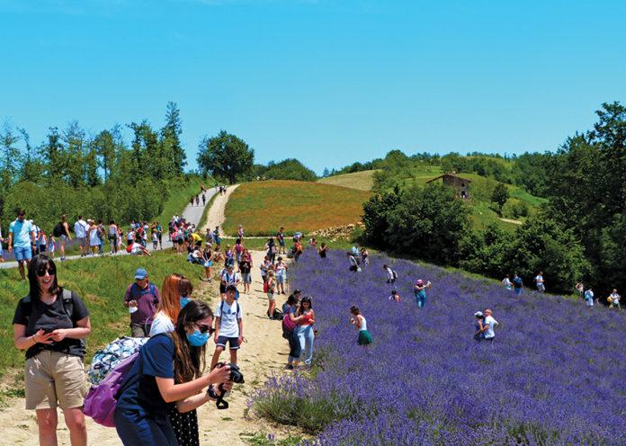 Lavanda boom: migliaia di turisti nei campi di Sale San Giovanni